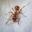 Уничтожение, выведение муравьев
