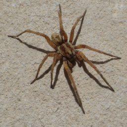 Уничтожение пауков в Одинцово